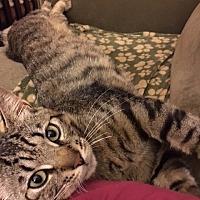 Adopt A Pet :: Sawyer - Stanford, CA