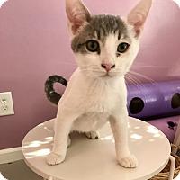 Adopt A Pet :: CARSON - Bakersfield, CA