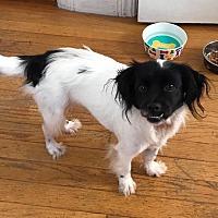 Adopt A Pet :: Hildie - Hainesville, IL