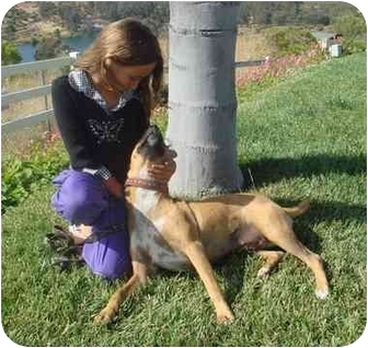 Rhodesian Ridgeback/Boxer Mix Dog for adoption in El Cajon, California - Lucy