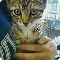 Adopt A Pet :: Theta - Riverhead, NY