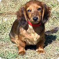 Adopt A Pet :: Eden - San Jose, CA