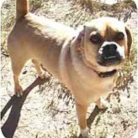 Adopt A Pet :: Jada - Gilbert, AZ