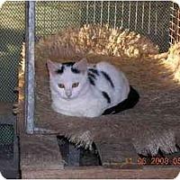 Adopt A Pet :: Dice - Union, SC