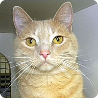 Adopt A Pet :: Joel - Green Bay, WI