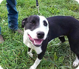 Terrier (Unknown Type, Medium) Mix Dog for adoption in Wattertown, Massachusetts - Oliver