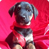 Adopt A Pet :: OLIVIA - Irvine, CA
