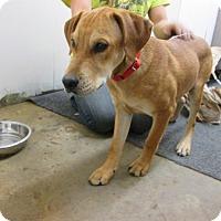 Adopt A Pet :: Lola - Houston, TX