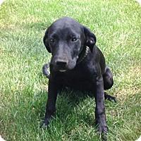 Adopt A Pet :: Jessa - Lewisville, IN