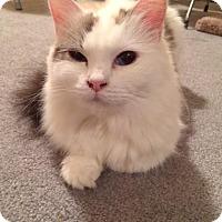 Adopt A Pet :: Jayda - Edmonton, AB
