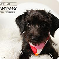 Adopt A Pet :: Hannah-pending adoption - Omaha, NE