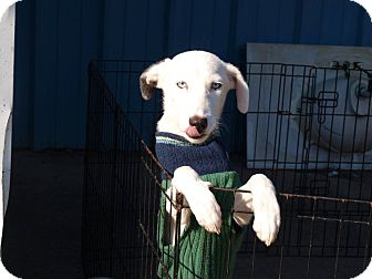 Terrier (Unknown Type, Medium) Mix Dog for adoption in Oakdale, Louisiana - Blu