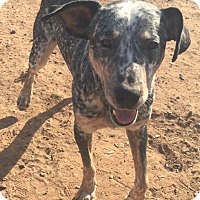 Adopt A Pet :: King Henry pending adoption - East Hartford, CT