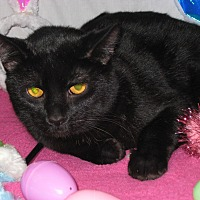 Adopt A Pet :: Batman - Eastpointe, MI