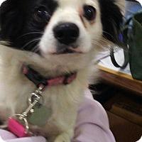 Adopt A Pet :: Jueliet - Okmulgee, OK