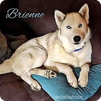 Adopt A Pet :: Brienne--Coming Soon! - Carrollton, TX