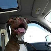 Adopt A Pet :: Sadie - Richmond, VA
