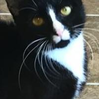Adopt A Pet :: Tish 496-17 - Cumming, GA