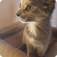 Adopt A Pet :: Gamora - Hazel Park, MI