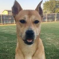 Adopt A Pet :: Lady Houston - Oklahoma City, OK