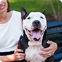 Adopt A Pet :: Lux - Reisterstown, MD