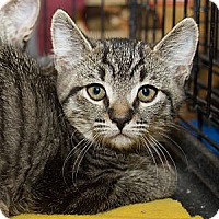 Adopt A Pet :: Ferngully - Irvine, CA