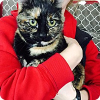 Adopt A Pet :: Dory - Xenia, OH