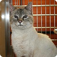 Adopt A Pet :: Bella - Kalispell, MT