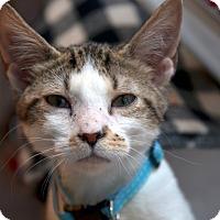 Adopt A Pet :: Rumbles - Brooklyn, NY