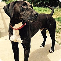 Adopt A Pet :: Simmerson - Worcester, MA