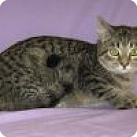 Adopt A Pet :: Nevada - Powell, OH