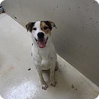 Adopt A Pet :: A03 Williams - Odessa, TX