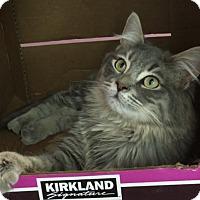 Adopt A Pet :: Grey - Whittier, CA