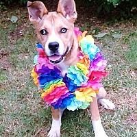 Adopt A Pet :: Pheobe - Vernon, TX