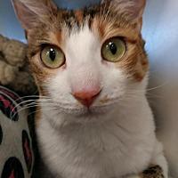 Adopt A Pet :: Petunia - San Ramon, CA