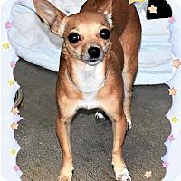 Adopt A Pet :: Tweedy - San Jacinto, CA