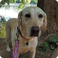 Adopt A Pet :: Molly #2 - Towson, MD