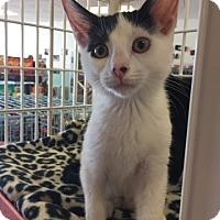 Adopt A Pet :: Nora - LaGrange Park, IL