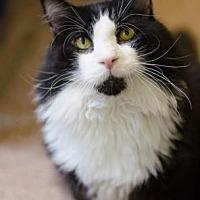 Adopt A Pet :: Pierce - Philadelphia, PA