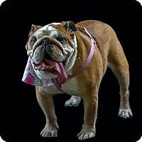 Adopt A Pet :: Bree - Odessa, FL
