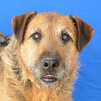 Adopt A Pet :: Donovan - Pagosa Springs, CO