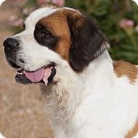 Adopt A Pet :: Zeke - Glendale, AZ