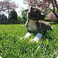 Adopt A Pet :: Sparky - South Jersey, NJ