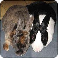 Adopt A Pet :: Anika - Santee, CA