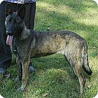 Adopt A Pet :: Malini in GA - Jamestown, CA