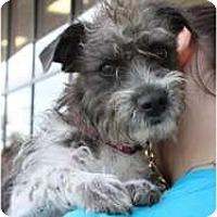 Adopt A Pet :: Phil - Arlington, TX