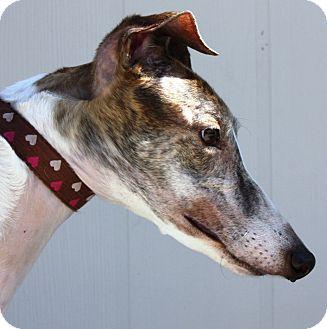Greyhound Dog for adoption in Orange County, California - Nellie