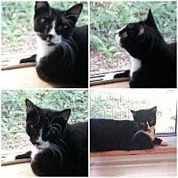 Adopt A Pet :: Gypsy - Ocala, FL