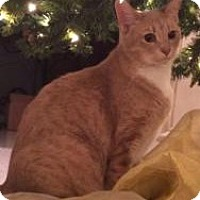 Adopt A Pet :: Ruby - Houston, TX