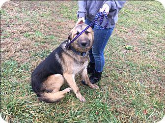 German Shepherd Dog Mix Dog for adoption in Staunton, Virginia - To be determined